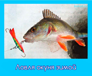 зимняя рыбалка окуня фото