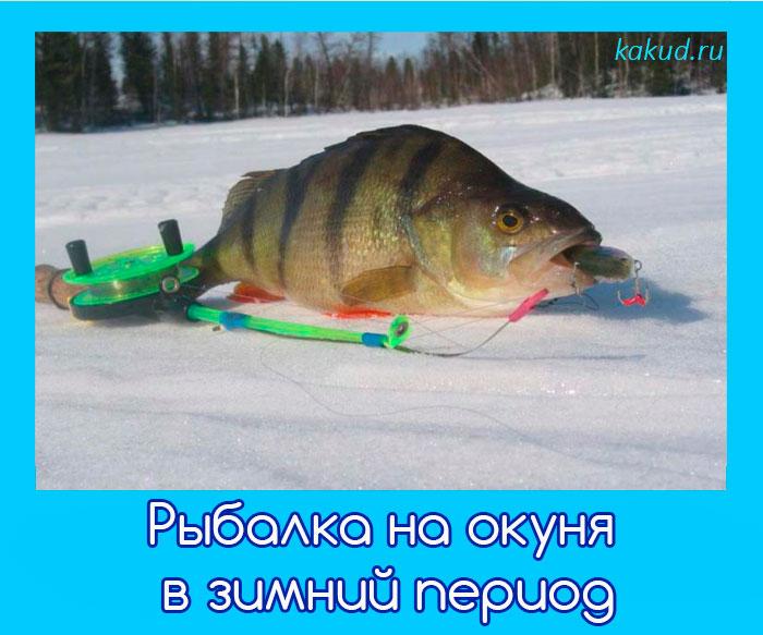 мормышки для ловля окуня зимой фото