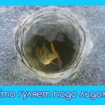Кто гуляет подо льдом