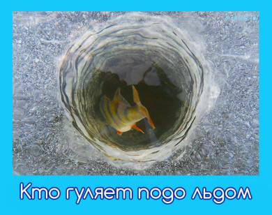 фото рыб зимой подо льдом