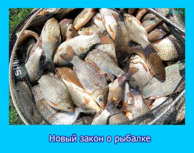 Новый закон о рыбалке