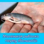 Маленькая рыбалка перед «большой»