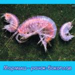 Мормыш – рачок-бокоплав
