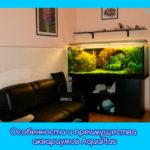 Особенности и преимущества аквариумов AquaPlus
