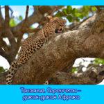 Танзания. Серенгети – дикая-дикая Африка