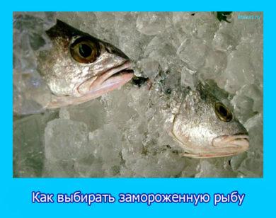 Как выбирать замороженную рыбу